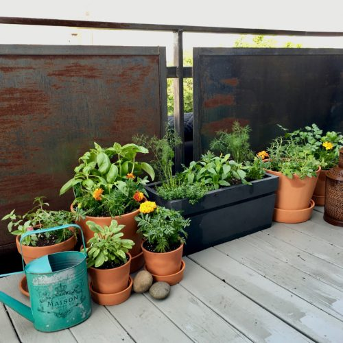 City Deck Herb Garden 1a