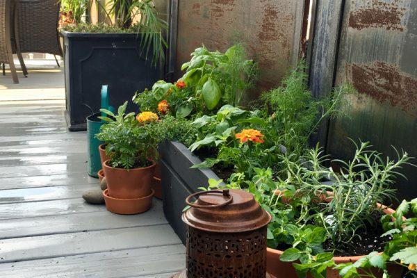 City Deck Herb Garden 1b